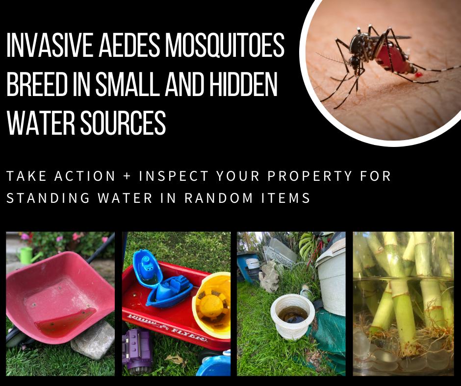 May contain: spider, animal, invertebrate, and arachnid