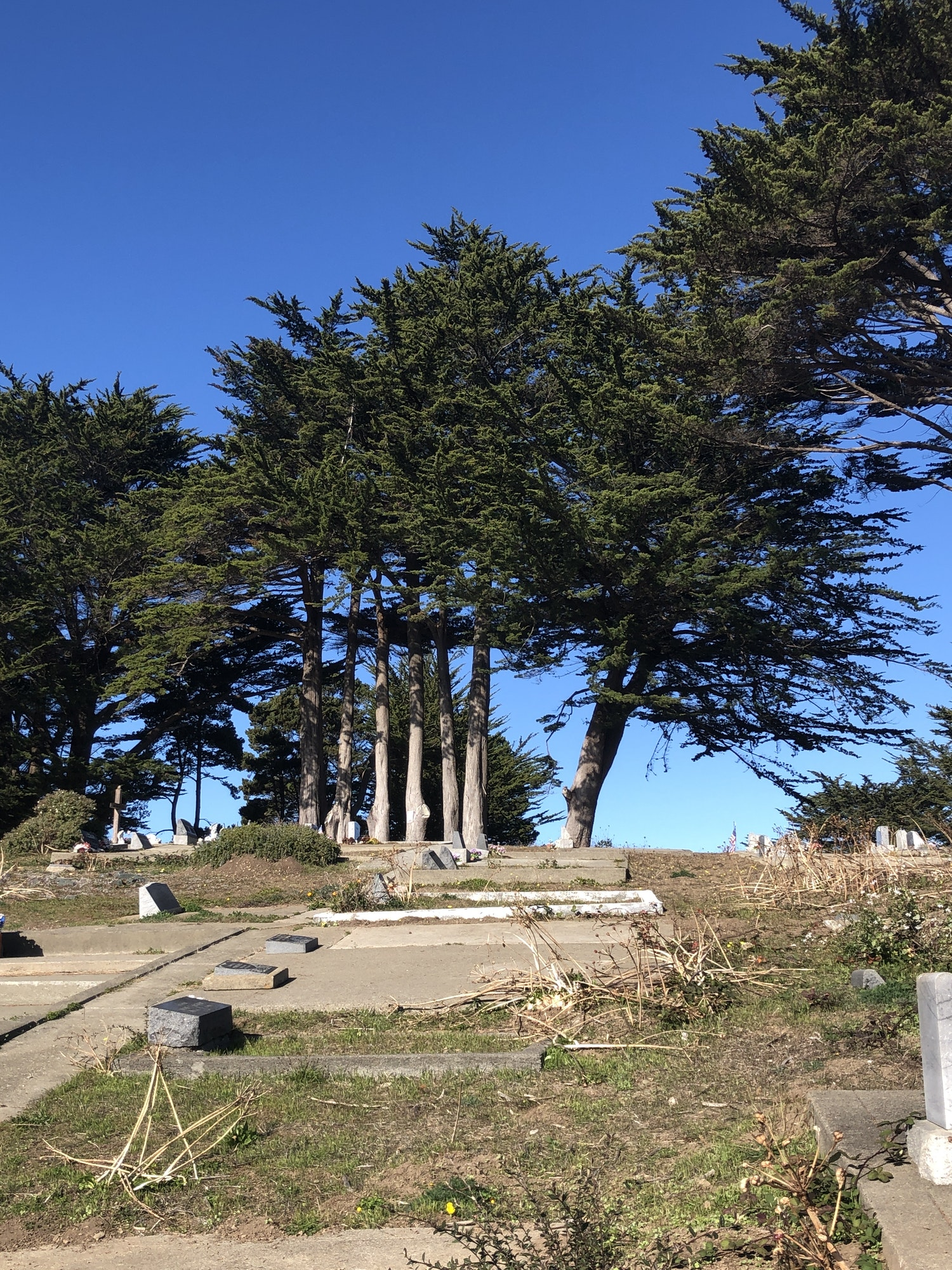 Photo of tombstones and a graveyard with large cypress trees.