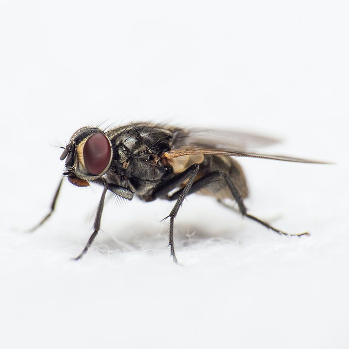May contain: asilidae, fly, animal, insect, and invertebrate