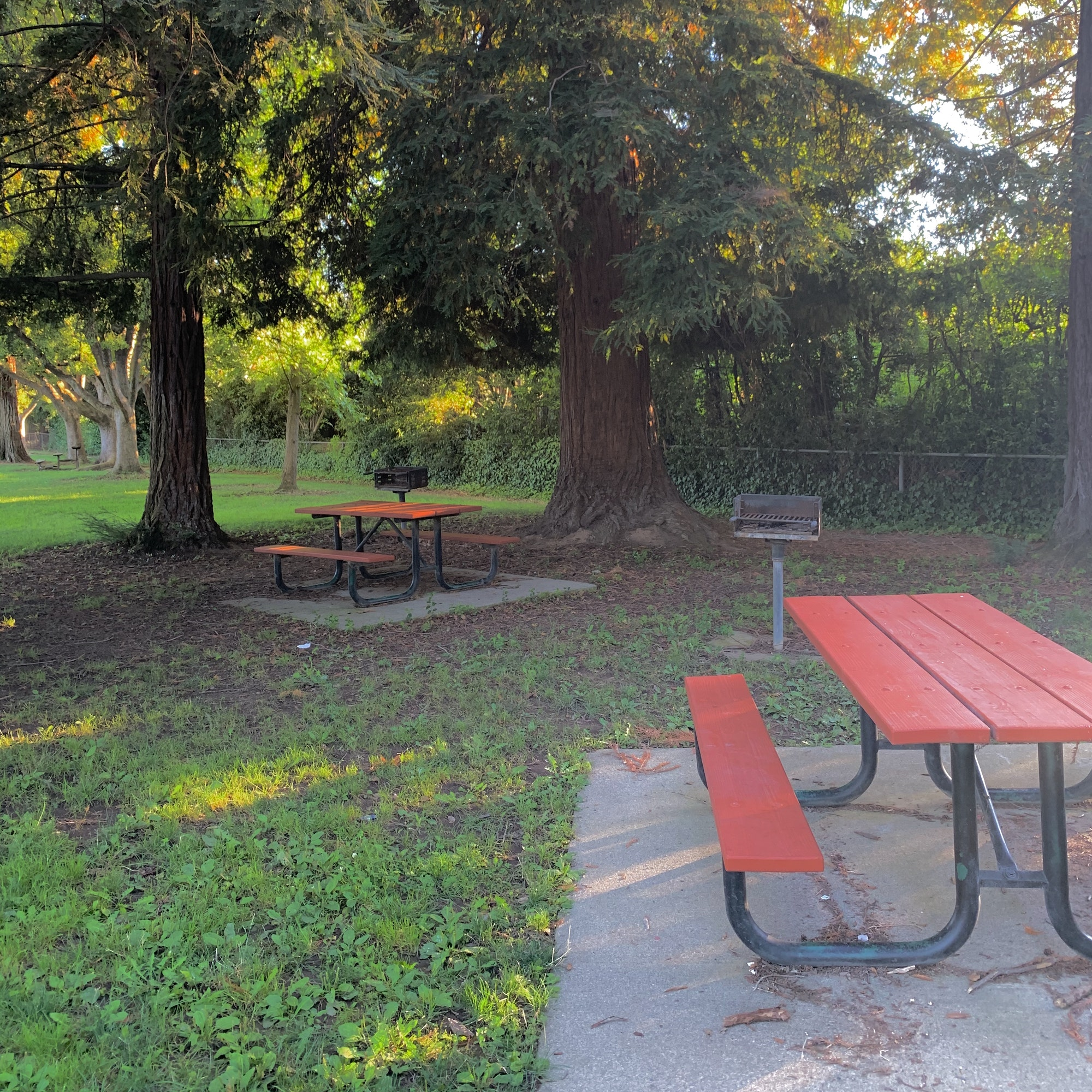 May contain: furniture, bench, park bench, tree, and plant