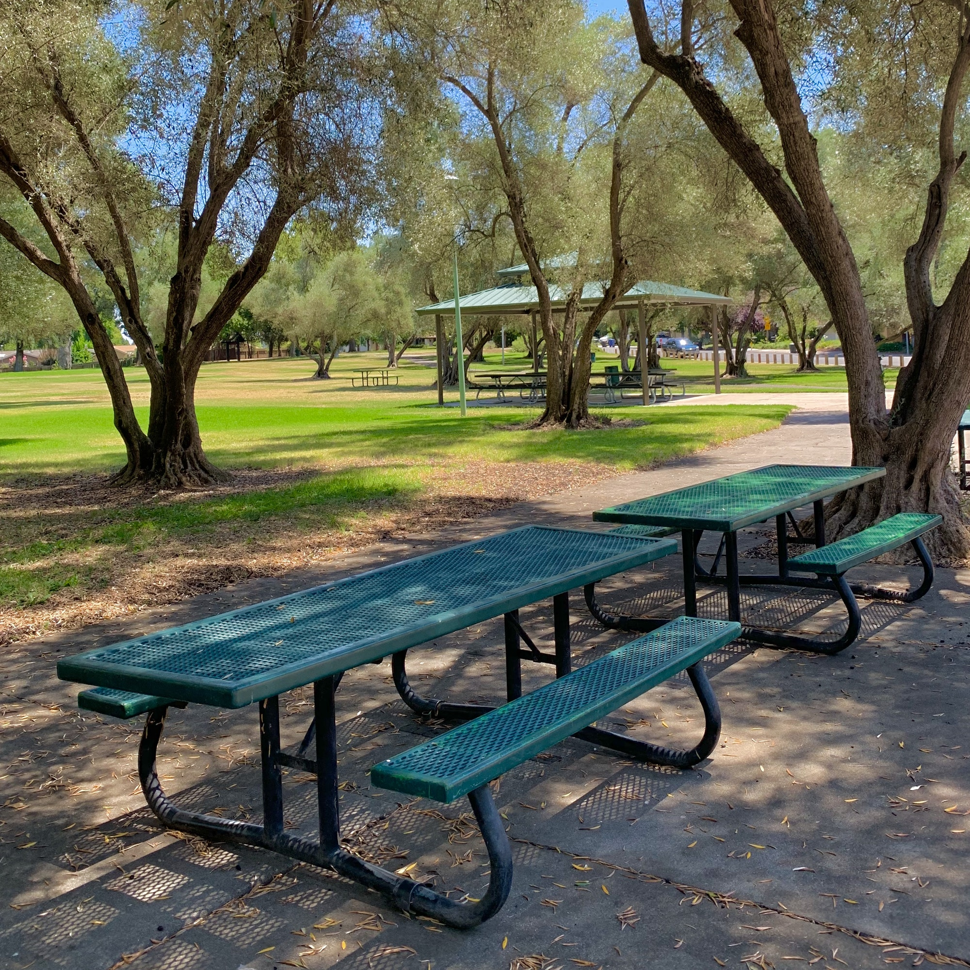 May contain: furniture, bench, park bench, plant, tree, and grass