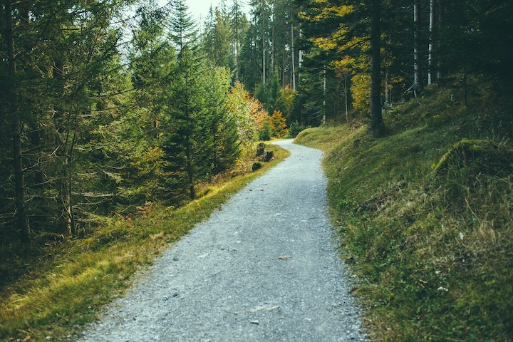 May contain: gravel, road, dirt road, abies, tree, fir, plant, path, tarmac, and asphalt