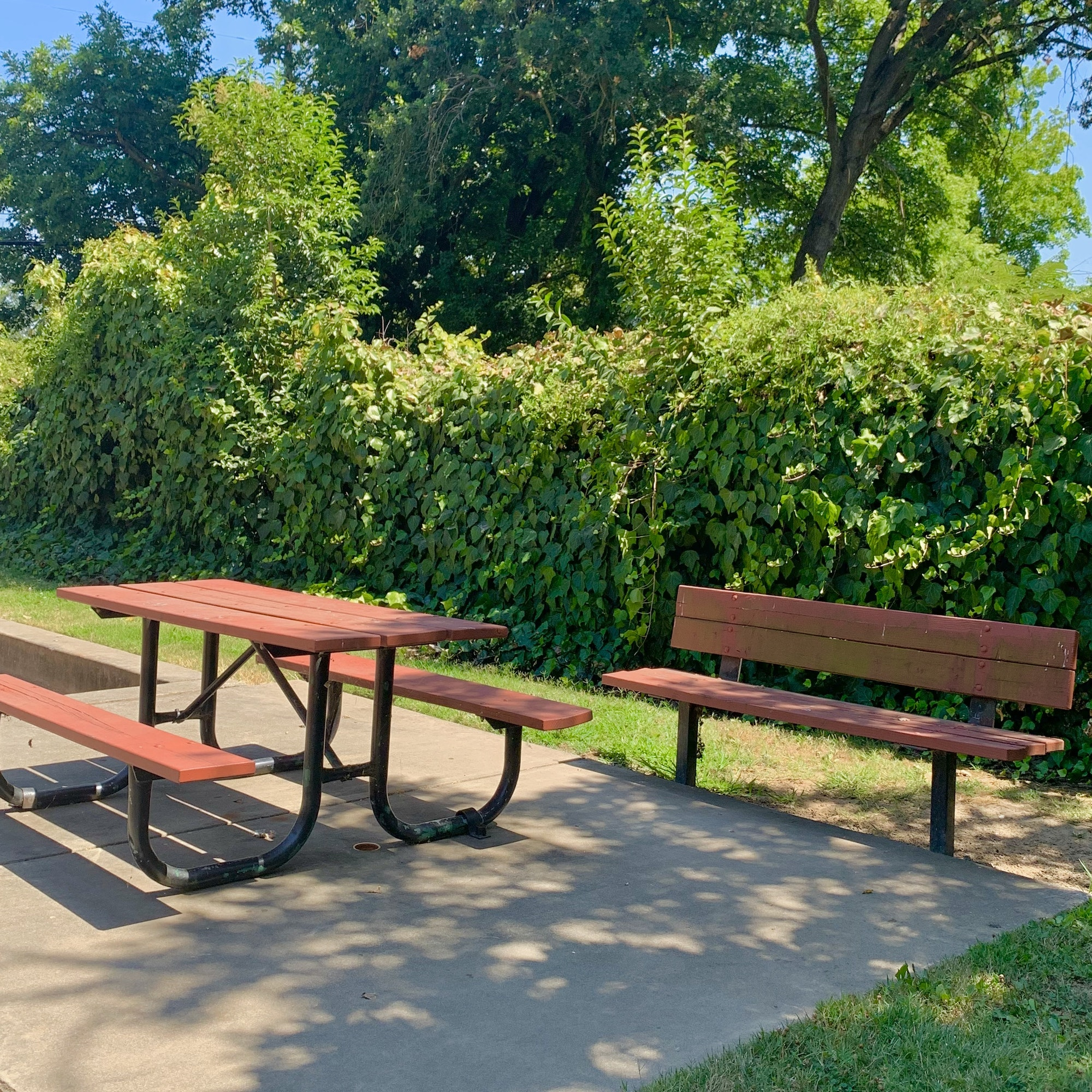 May contain: furniture, bench, tabletop, park bench, plant, grass, and table