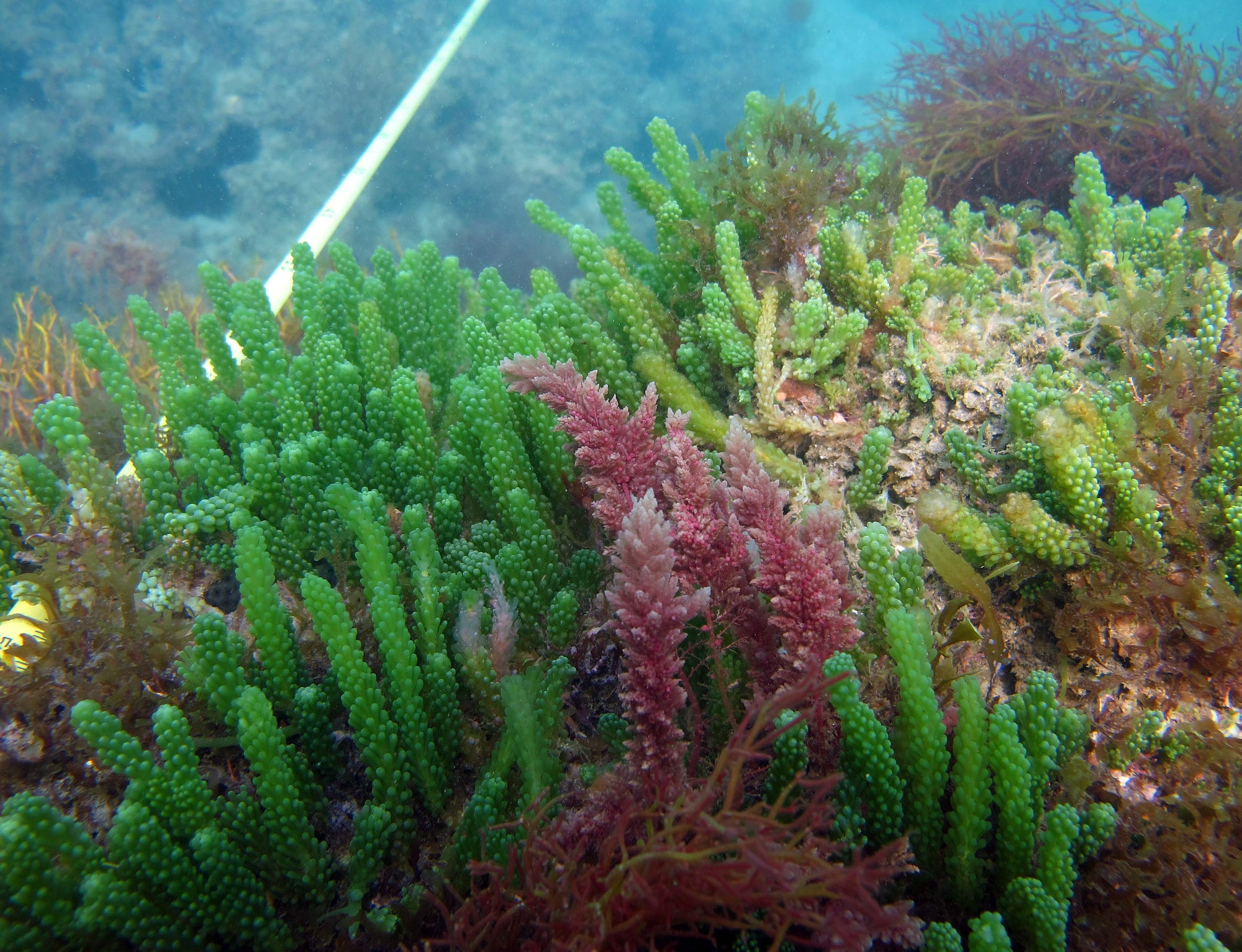 colorful macroalgae underwater