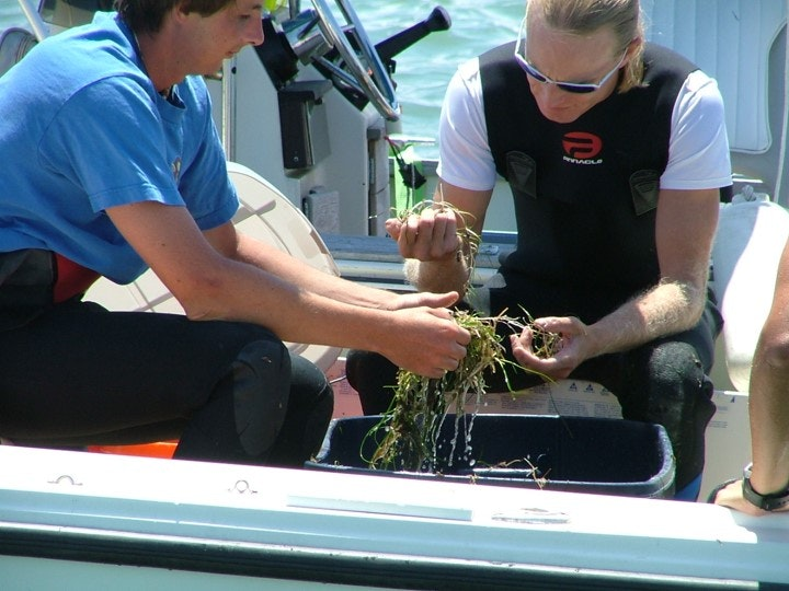 two people on boat looking a seagrass samples in field