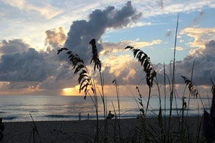 sea oats in foreground of sunrise over the ocean