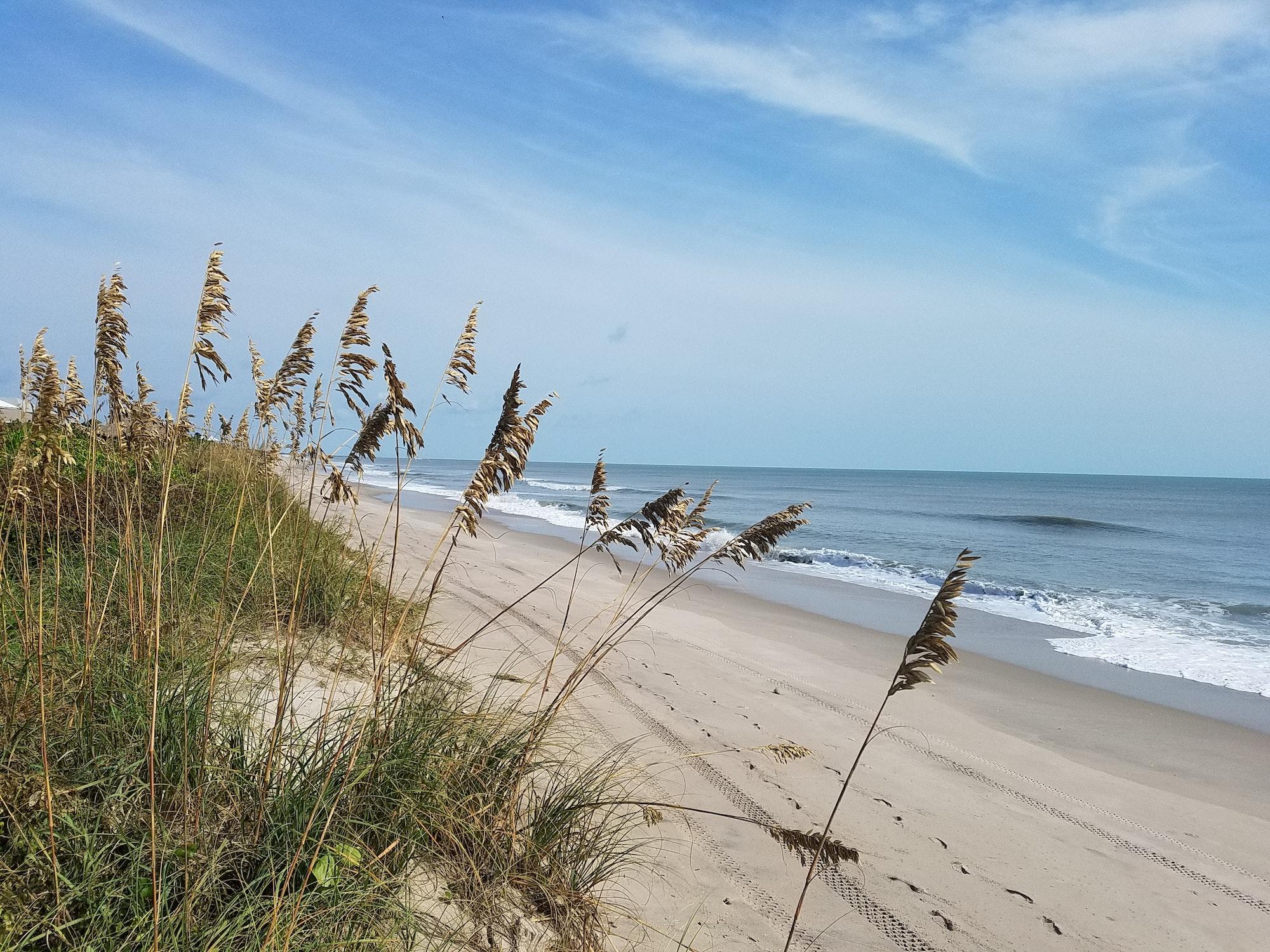 sea oats on the dune overlooking the beach