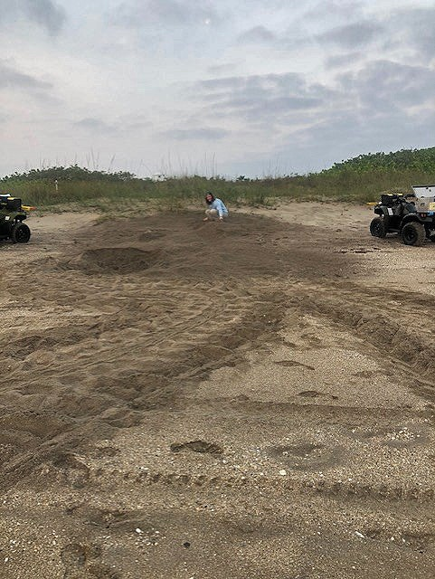 beach with turtle tracks and nests with person and ATVs