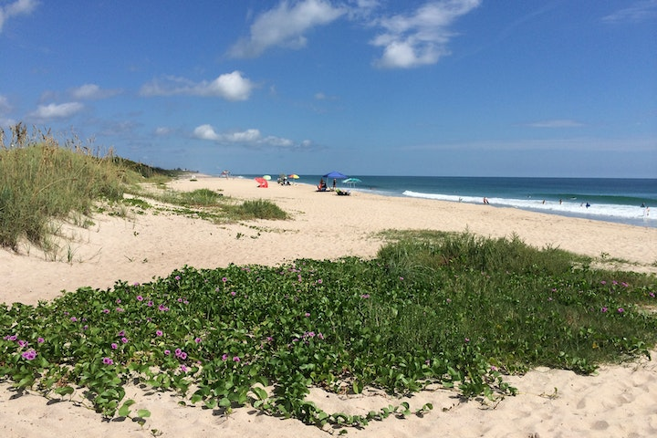 vines growing on the beach with beachgoers in background
