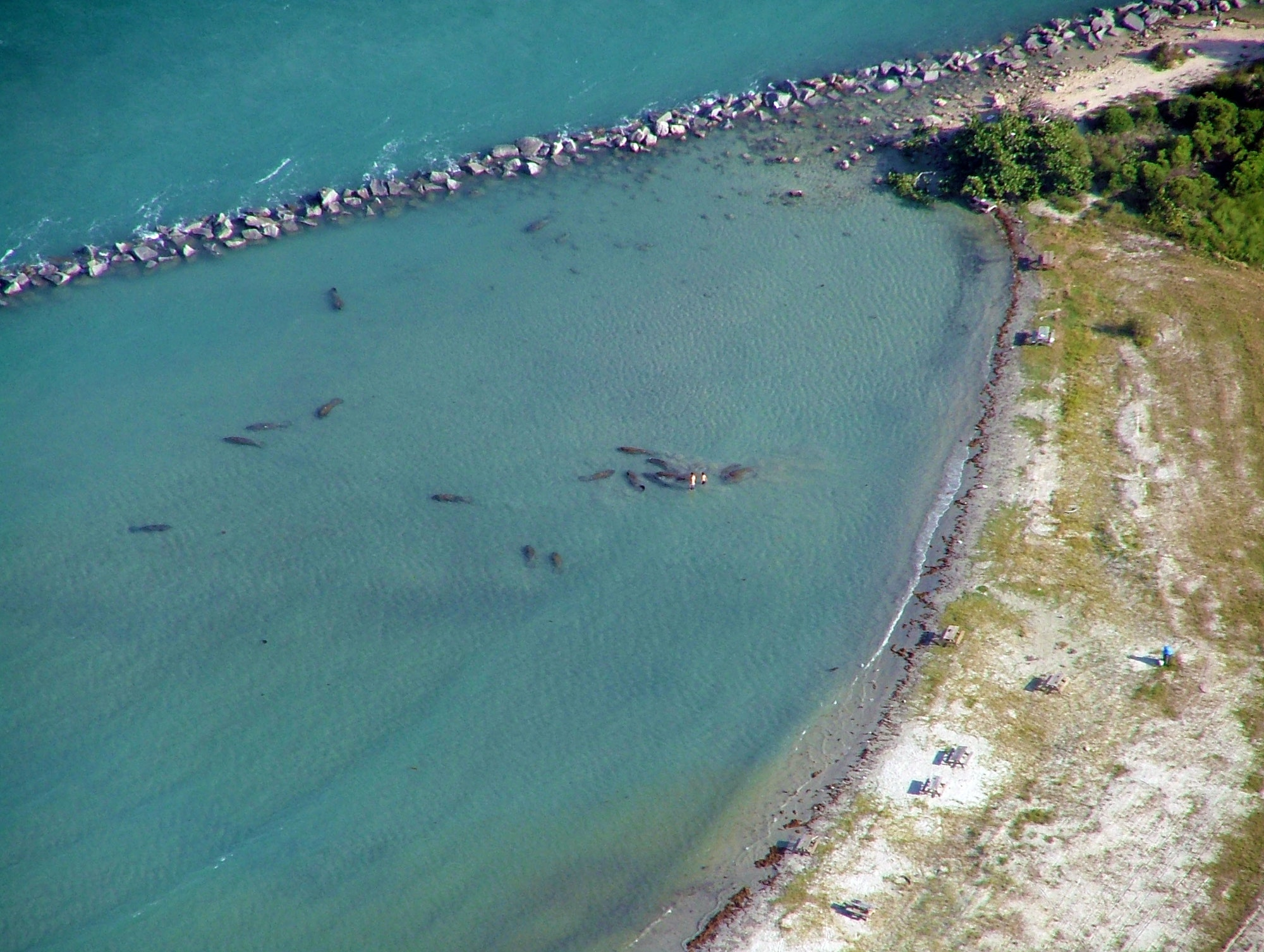 aerial view of manatees in the tide pool at Sebastian Inlet