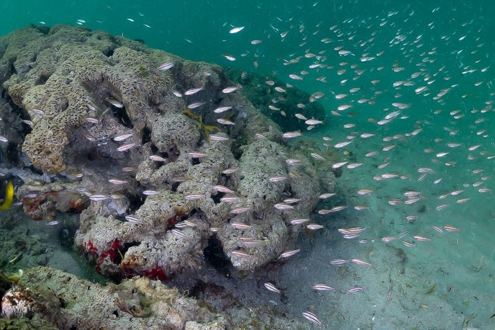 school of fish swimming by wormrock