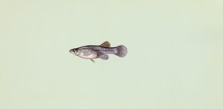 May contain: animal, fish, sea life, and mullet fish