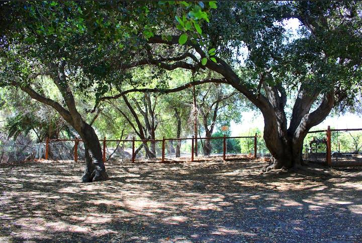Camarillo Grove Dog Park