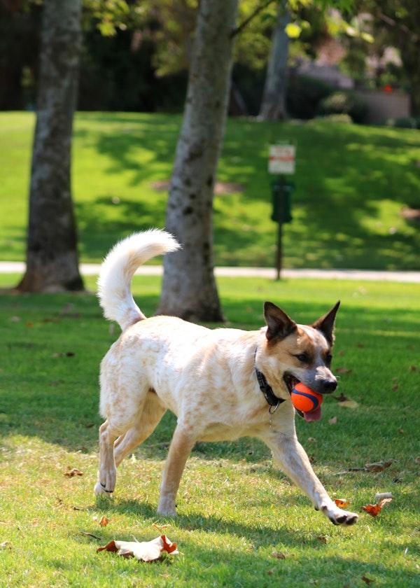 Mission Oaks Dog Park