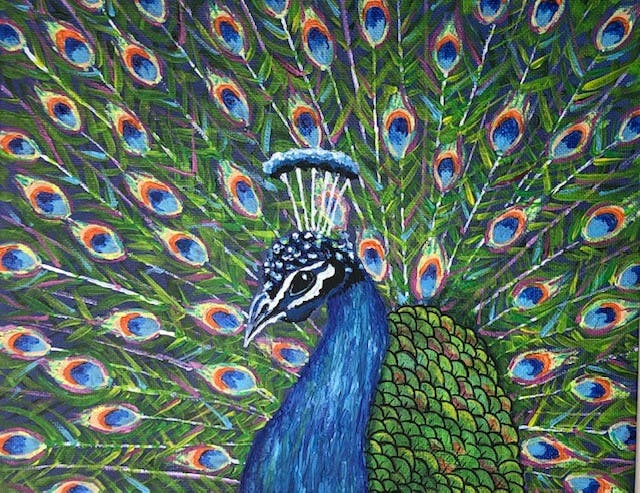 May contain: peacock, animal, and bird
