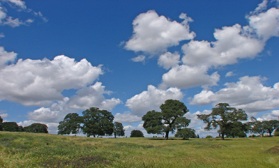 May contain: nature, outdoors, field, weather, grassland, cloud, sky, and cumulus