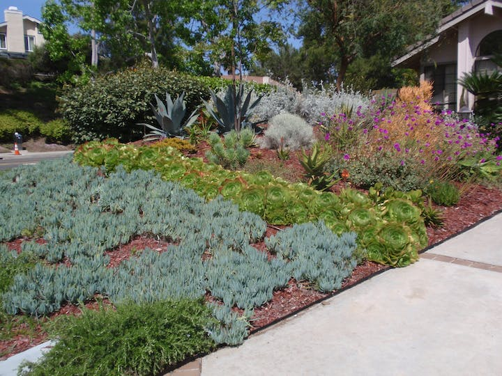 Photograph of WaterSmart landscaping at a residential home.
