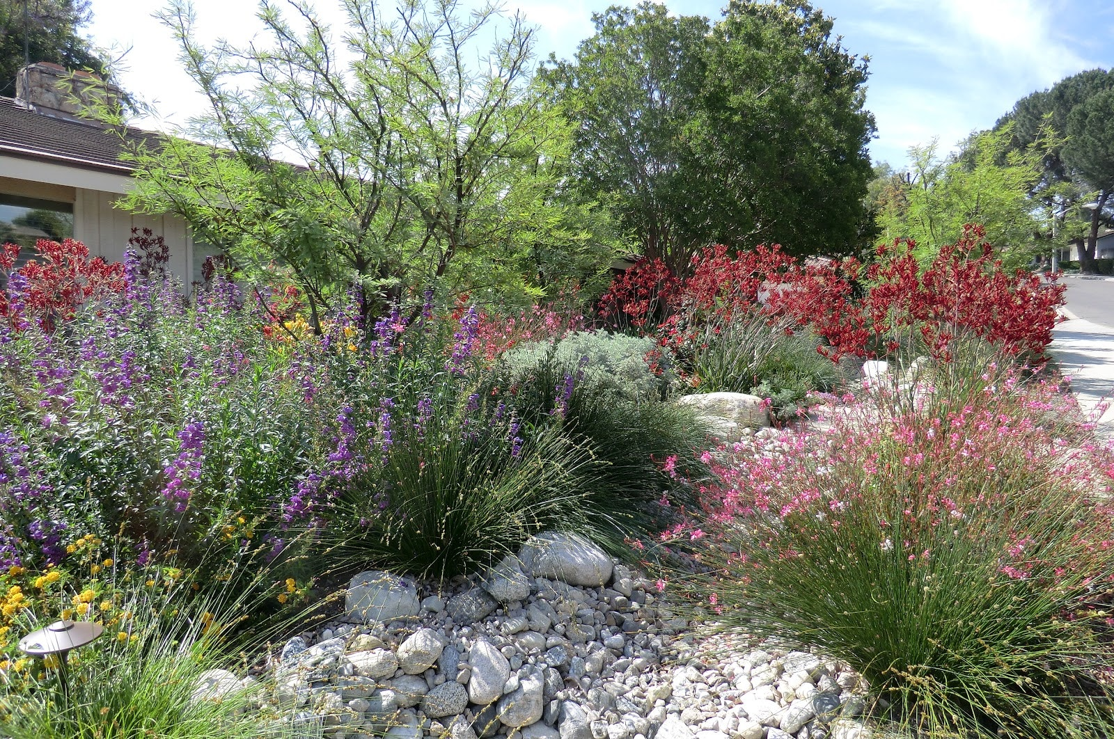 California friendly landscape with spring blooms and river rock.