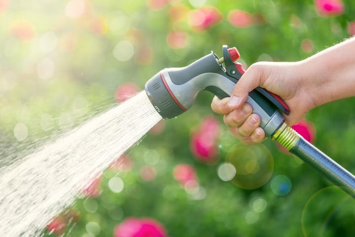 Watering garden with hose.