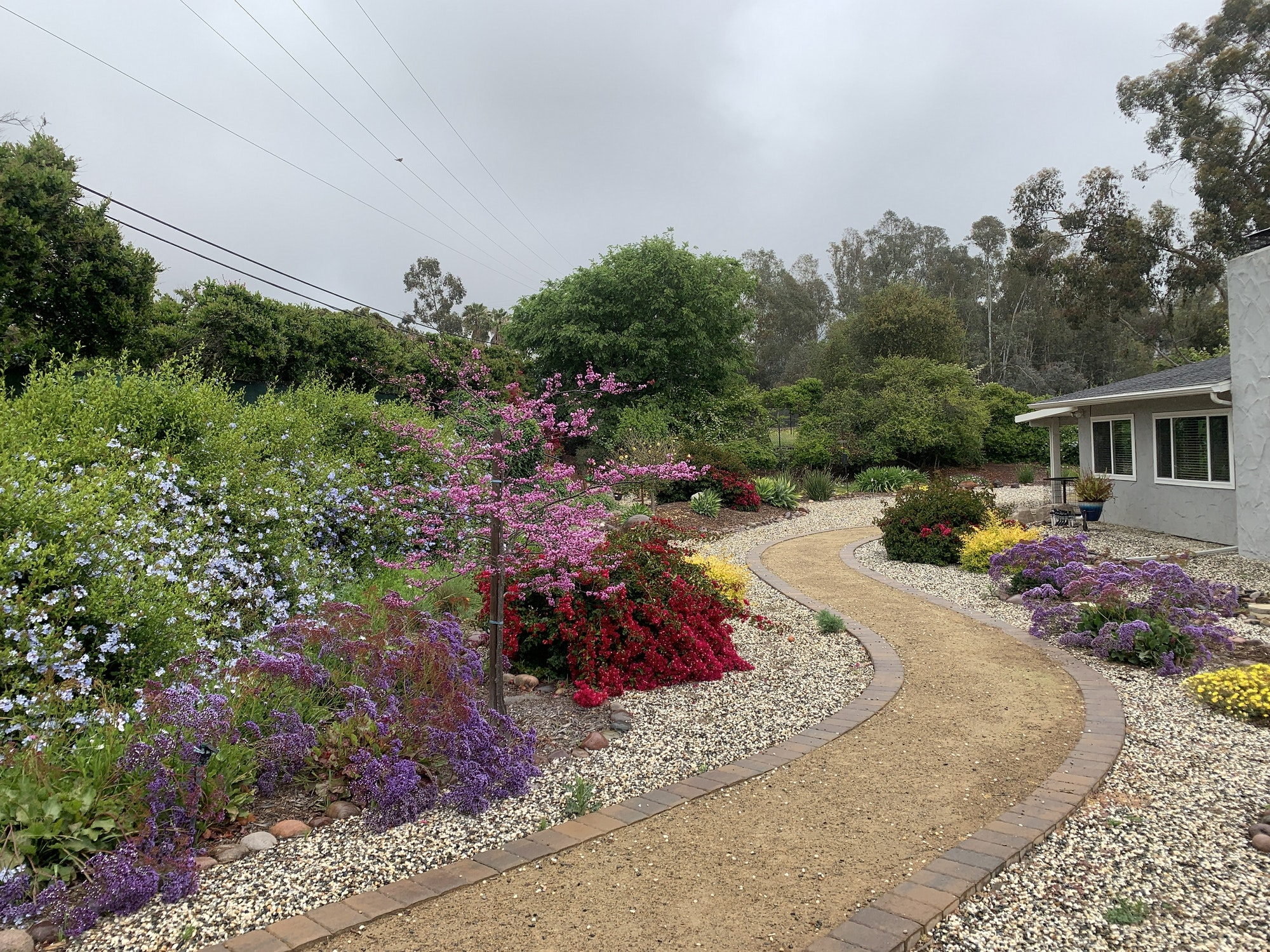 May contain: decomposed granite walkway, flagstone, bouganvilla, yellow, blue and purple blooms lining walkway
