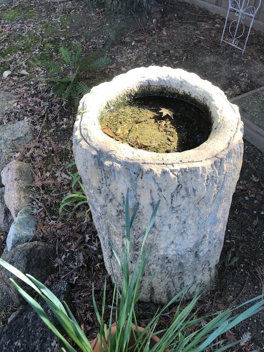 Bird bath with stagnant water inside