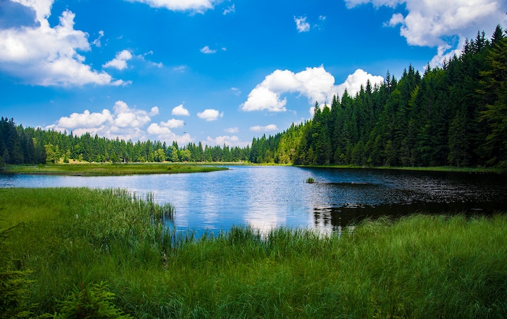May contain: nature, outdoors, water, tree, plant, lake, abies, and fir