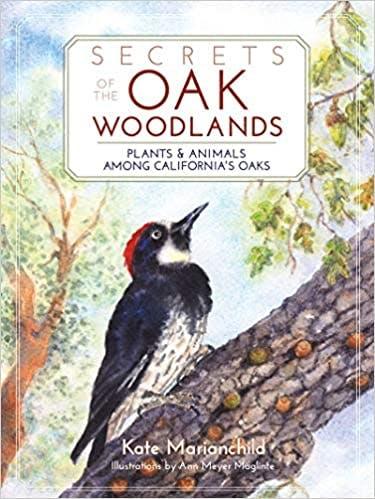 May contain: woodpecker, animal, flicker bird, and bird