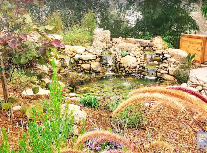 A photogenic garden scene with water