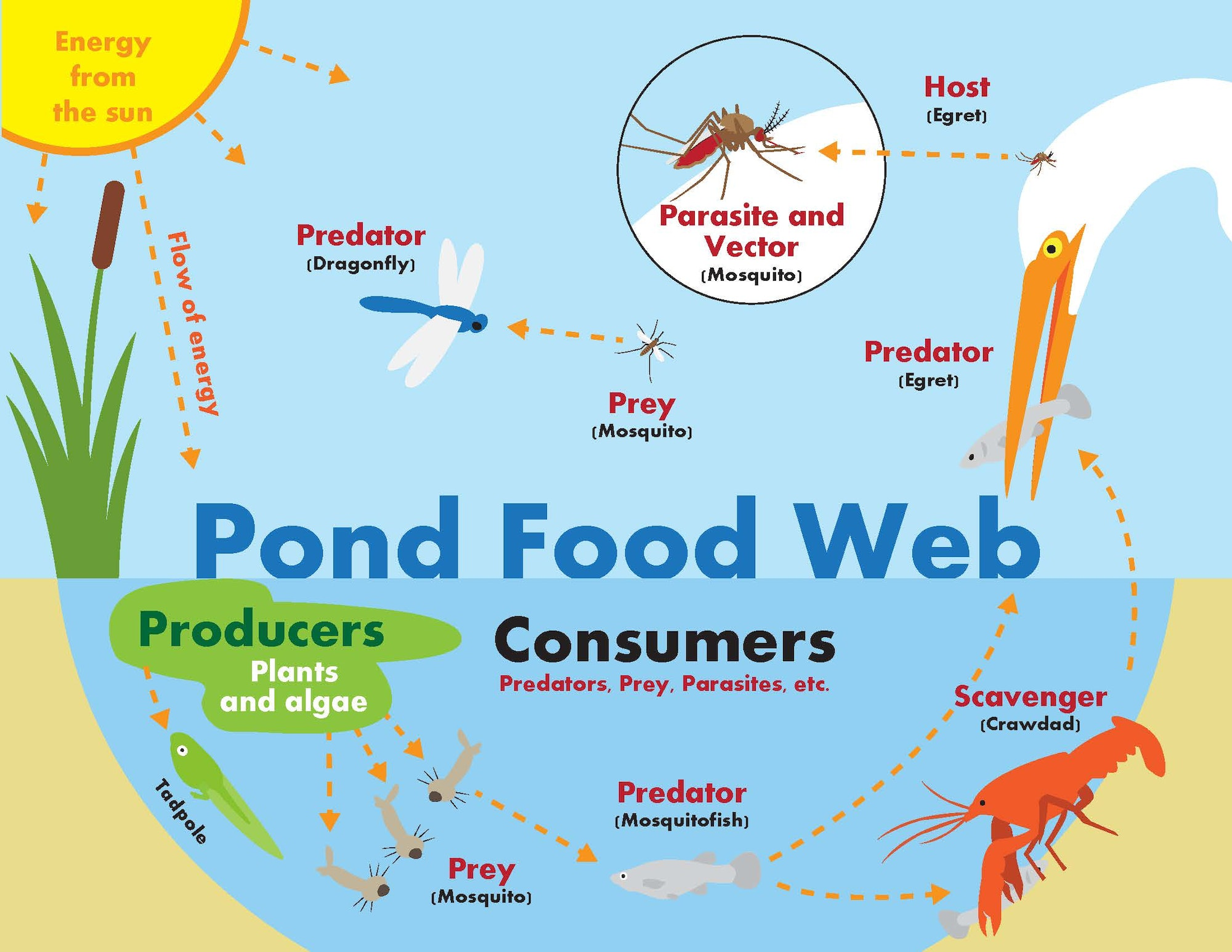 Food web diagram