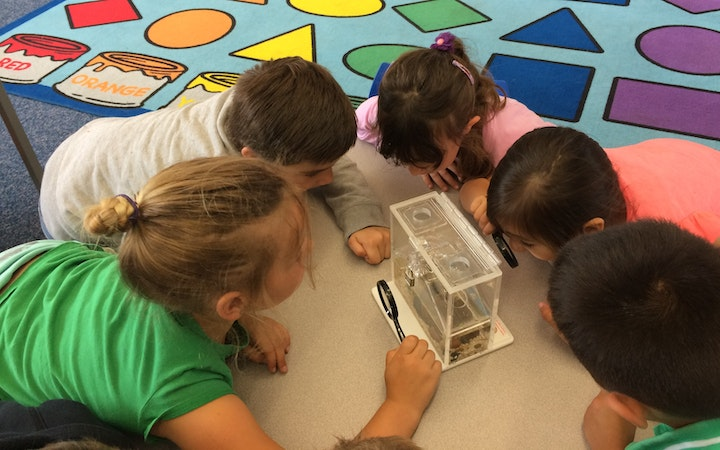 Students using mosquito life cycle kit