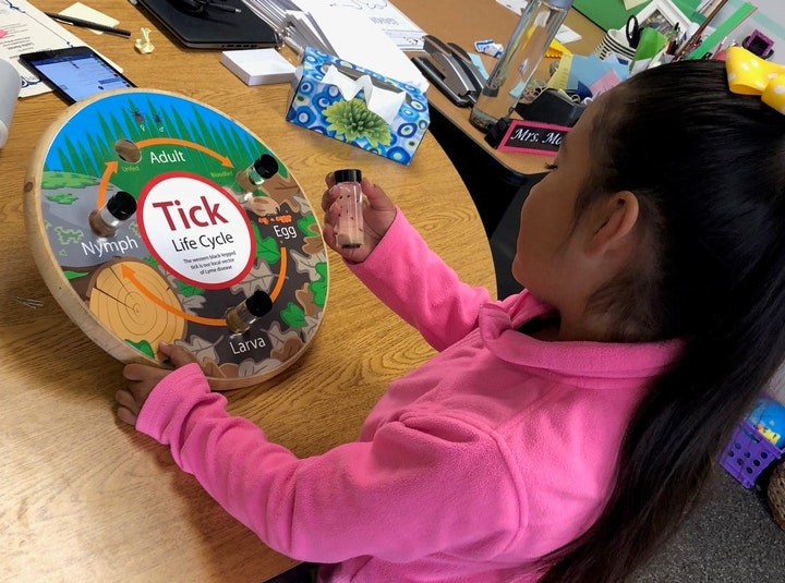 Student using tick life cycle kit