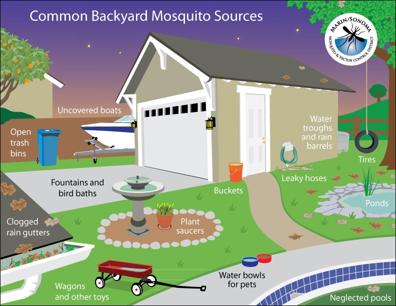 Common backyard sources graphic