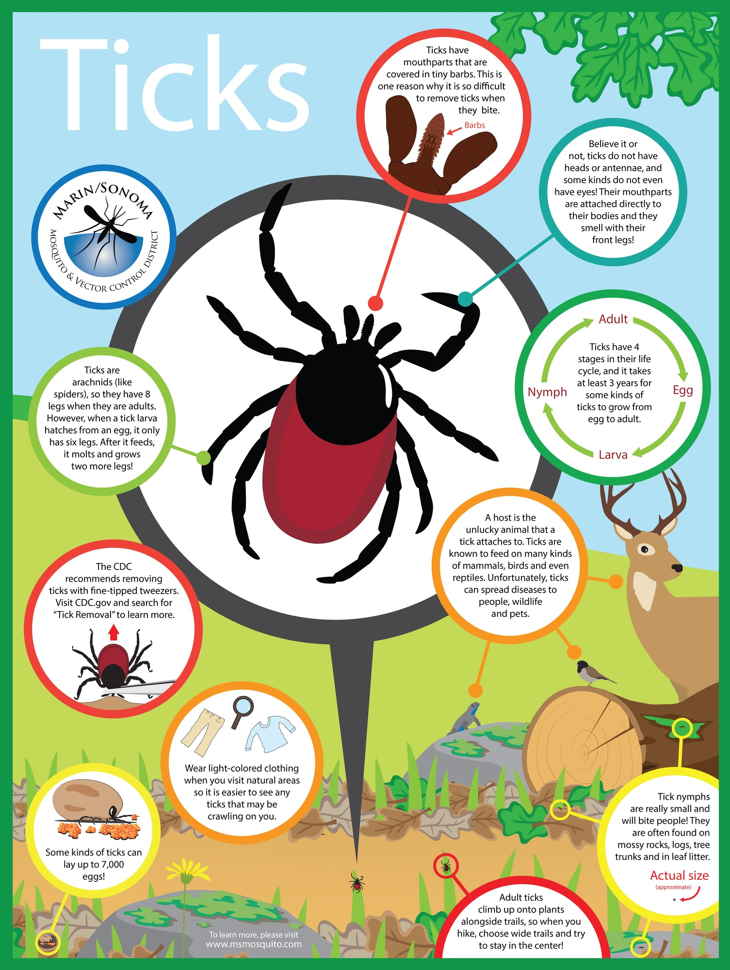 Tick Poster (available for classrooms)