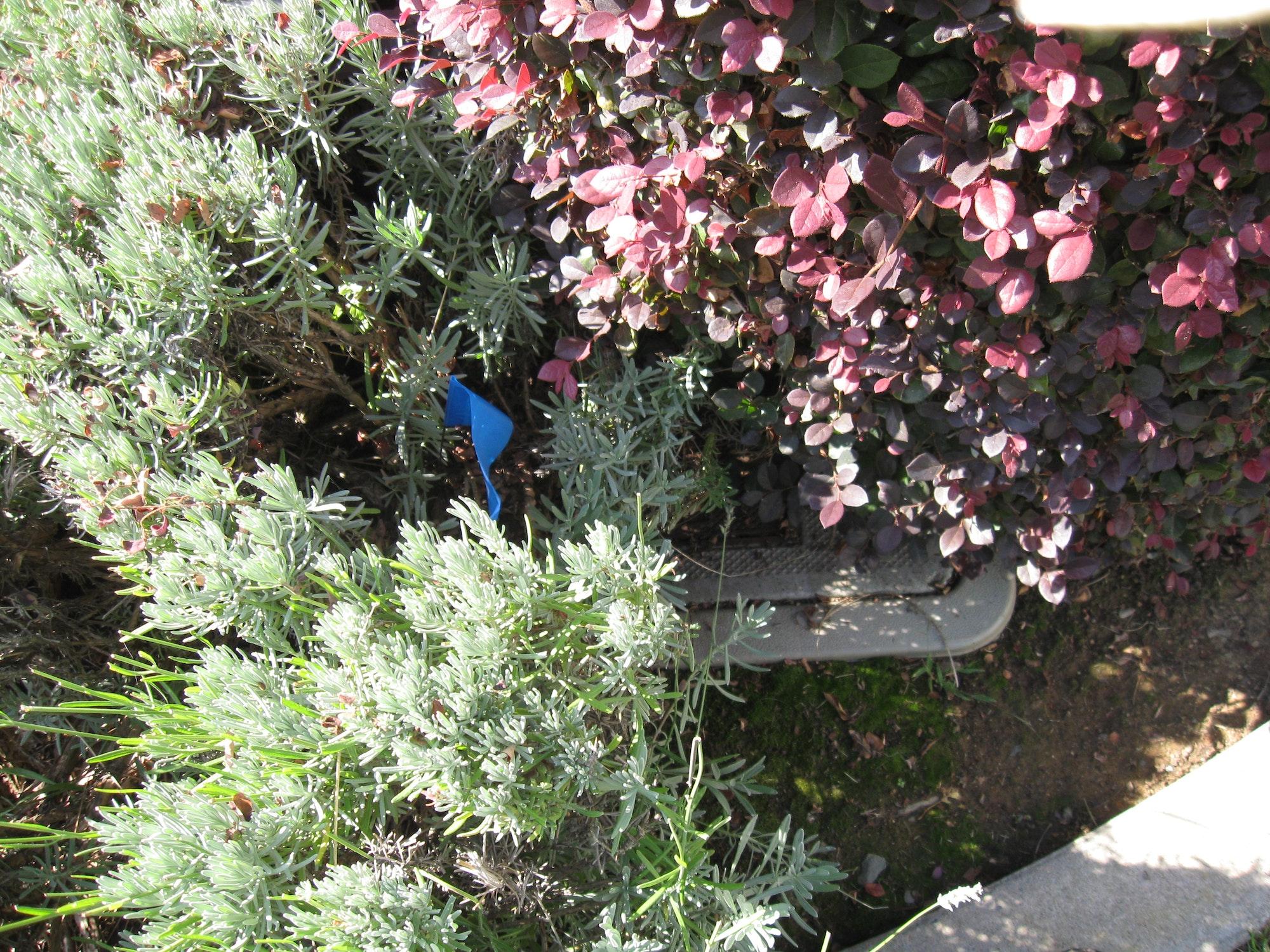 overgrown meter box