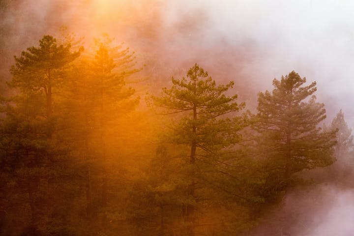 May contain: nature, tree, plant, weather, fir, abies, and fog