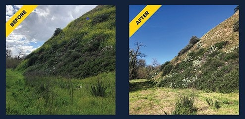 May contain: slope, nature, outdoors, vegetation, plant, land, grassland, and field