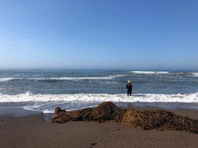 May contain: sea, ocean, water, nature, outdoors, shoreline, person, human, beach, coast, and sea waves