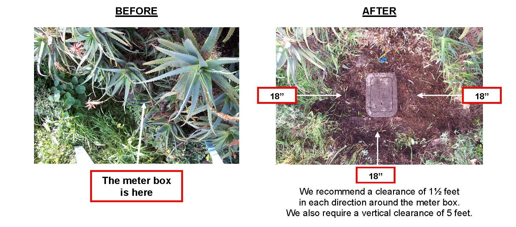 Contains: plant, weeds, covered water meter box, uncovered meter box, Before and After Picture of cleared meter box