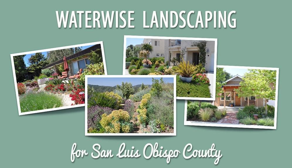 grass, plant, yard, outdoors, nature, bush, vegetation, woodland, tree, land, Waterwise Landscaping