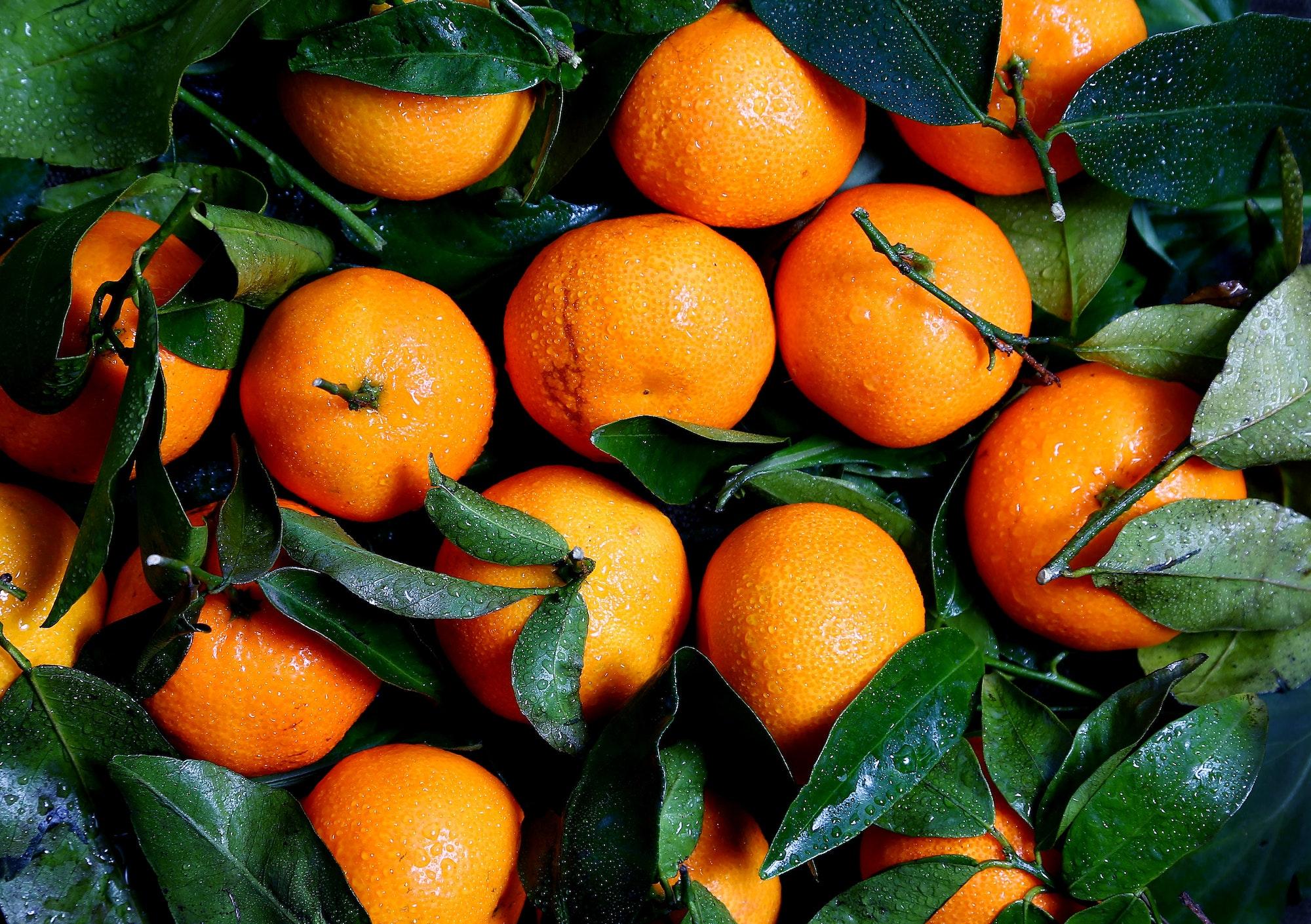 May contain: citrus fruit, plant, fruit, food, orange, grapefruit, and produce
