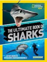 May contain: person, human, animal, sea life, fish, great white shark, and shark