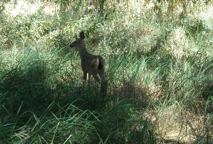 May contain: mammal, animal, wallaby, kangaroo, wildlife, and deer