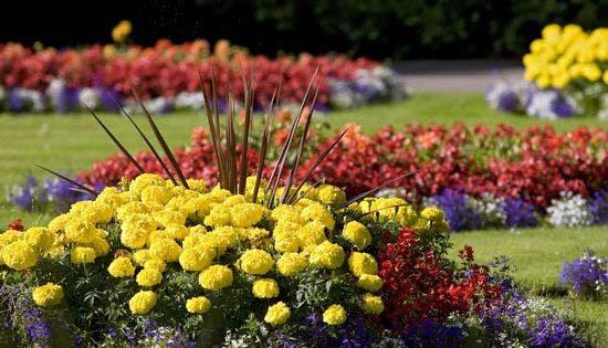 May contain: plant, dahlia, flower, blossom, outdoors, garden, vegetation, and petal