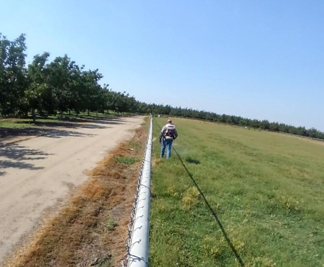 Adulticiding a pasture