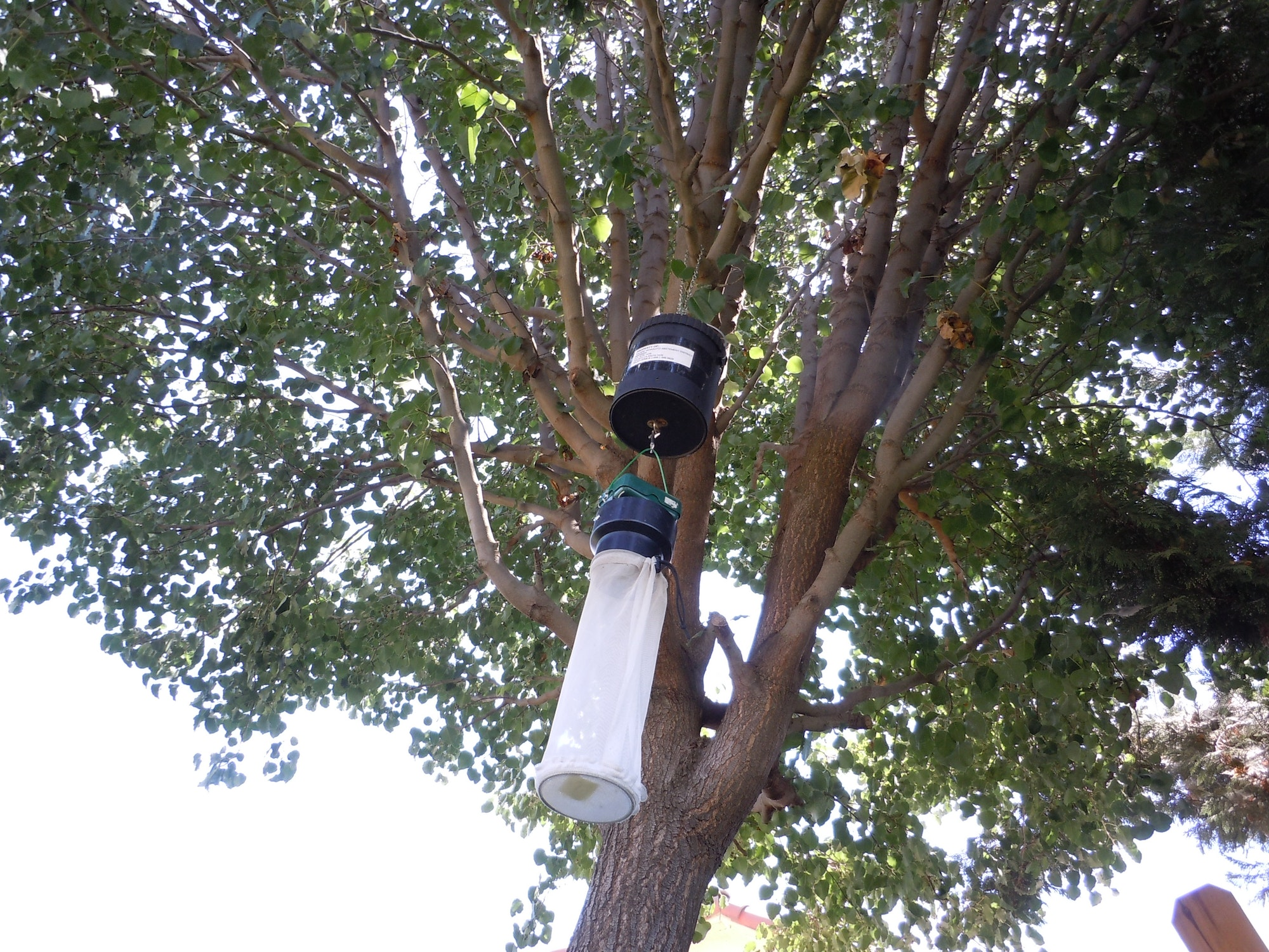 Mosquito trap in a tree