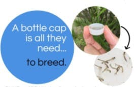 bottle cap breeding