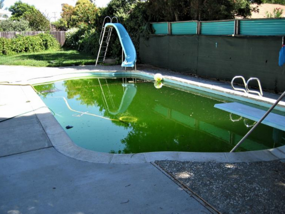 May contain: pool, water, yard, nature, outdoors, and swimming pool