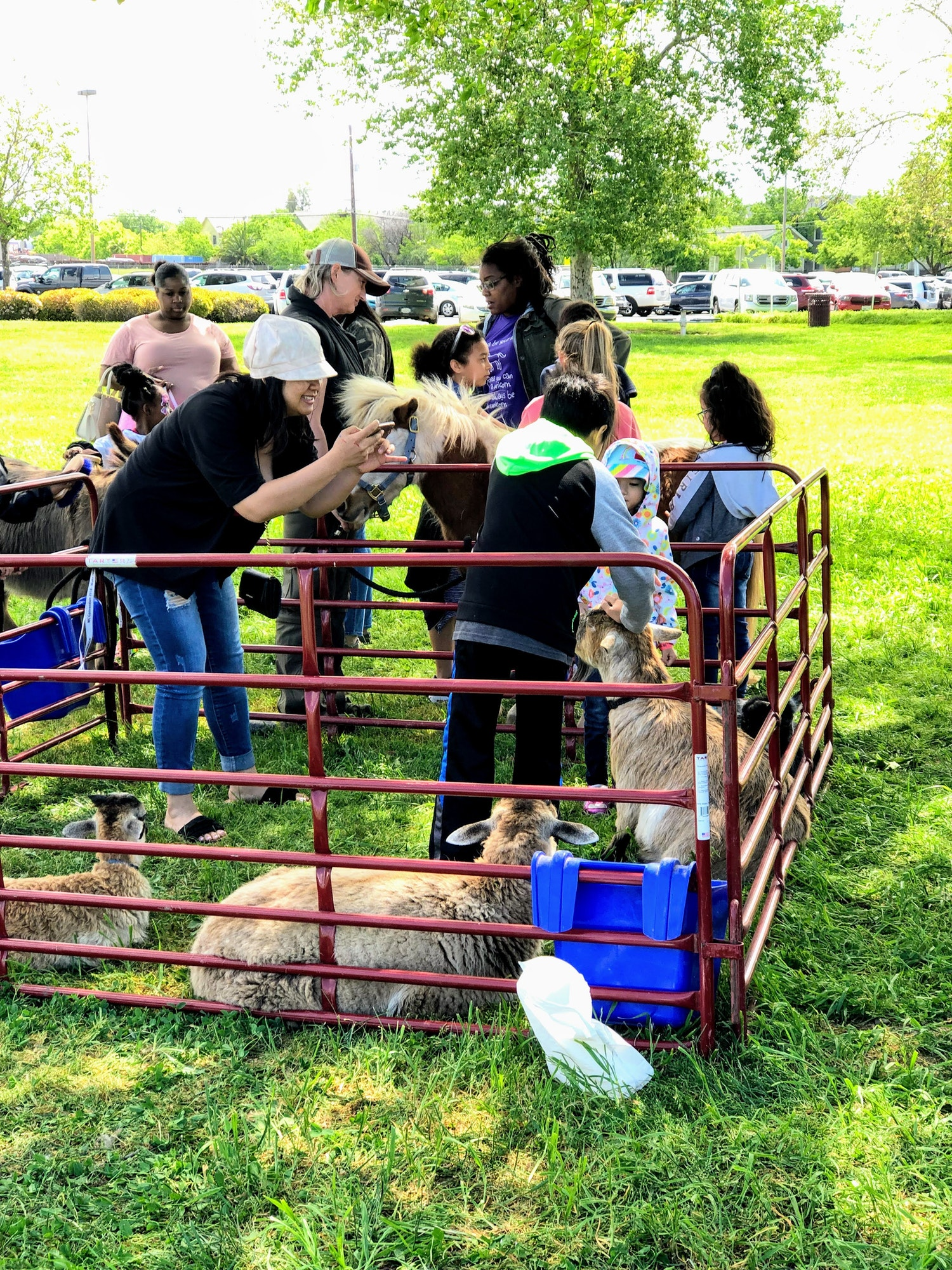 Spring Fling event petting zoo