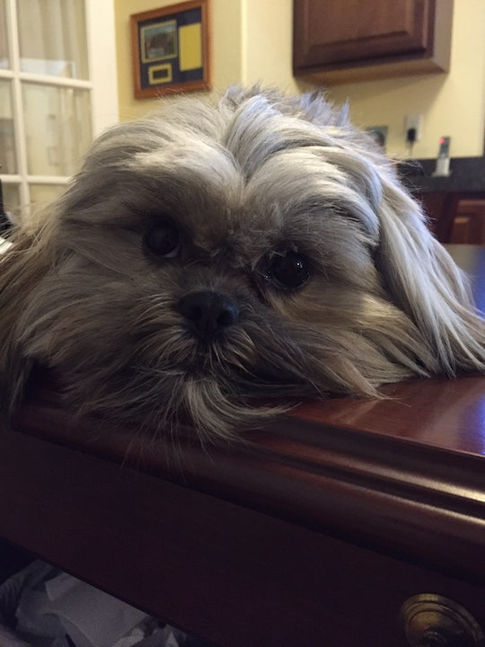 Emotional Support Staff, Cooper, Temecula Cemetery District