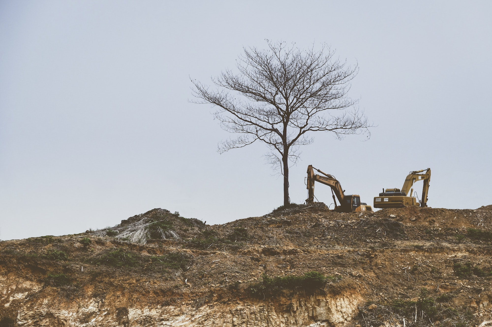 picture of a backhoe & tree on hill